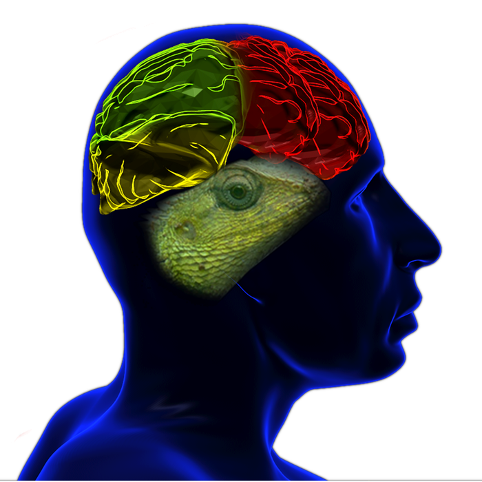 race-lizard-brain