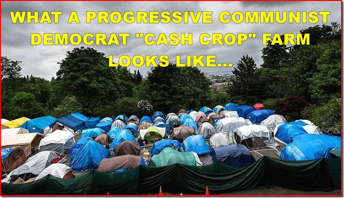 PCD-CASH-CROP